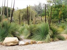 Australian gardeners should select native plants for rock gardens. Native plants are usually easier to grow and more pest resistant than exotics. Australian Garden Design, Australian Native Garden, Australian Plants, Modern Garden Design, Landscape Design, Landscape Architecture, Back Gardens, Outdoor Gardens, Rock Garden Plants