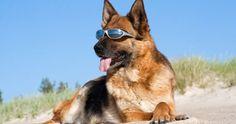 Un cane che sa usare un distributore di bevande | Lemon tube