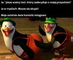 Funny Mems, Haha Funny, Funny Lyrics, Polish Memes, Weekend Humor, School Memes, I Laughed, Thats Not My, Fandoms
