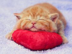 ..........TARA LOVES HER LITTLE RED PILLOW SO MUCH........YES, BABY GIRL, IT'S YOURS - ALL YOURS................ccp