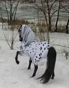 This is the most beautiful horse I've ever seen! Deer, Horses, Cute Animals, Google, Beautiful, Thoroughbred, Pretty Animals, Cutest Animals, Cute Funny Animals