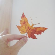 Butterfly made from leaf