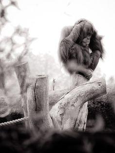 We Animals | Zoos