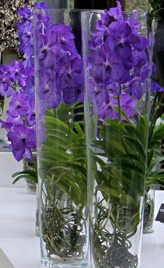 Blue Vanda orchids in glass vases Orchids Garden, Orchid Plants, Exotic Plants, Exotic Flowers, Beautiful Flowers, Arrangements Ikebana, Flower Arrangements, Purple Orchids, Purple Flowers
