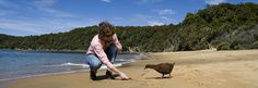 See weka roaming free on a Patterson Inlet Cruise when you visit Stewart Island Stuff To Do, Things To Do, Milford Sound, Forest Hill, Island Tour, Amazing Destinations, Bald Eagle, New Zealand, Cruise