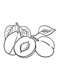 printable plum coloring page free pdf download at httpcoloringcafecom