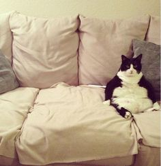 10 Awkwardly Sitting Cats That Just Want To Be Human | EntertainmentWise