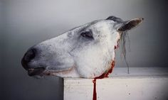 Horse Head (detail) from Dark Mirror.