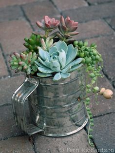 Succulent Gift Ideas Container Gardening- I love this! Would be so cute in one of those garden windows in a kitchen!Container Gardening- I love this! Would be so cute in one of those garden windows in a kitchen! Indoor Plants, Plants, Garden Decor, Planting Flowers, Flowers, Succulents, Diy Garden, Container Gardening, Garden