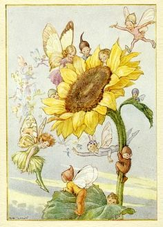 Sunflower with fairies - Illustration from the book 'Magic Flowers'.