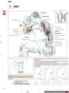 Training Anatomy - Arms - Curls