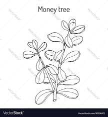Illustration, Symbols, Tatoos, Flowers, Decor, Art, Medicinal Plants, Art Background, Decoration