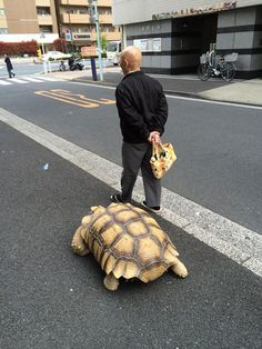 old-man-walking-with-african-spurred-tortoise-02