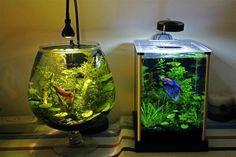 Người Việt khỏe mạnh: Cách chăm sóc và một số mẫu hồ cá cảnh, bể ...