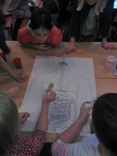 Leerlingen leggen de kaartjes bij verschillende organen.