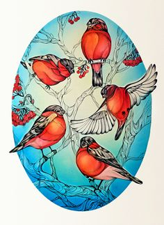 Bullfinch by Alice Macarova, via Behance