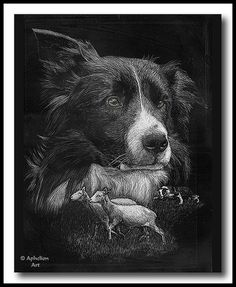 montage of herding border collie completed in 2004 and sold at the 2004 Meeker Sheepdog Trial. Scratchboard Art, Border Collies, Black Bear, Rug Hooking, View Image, Locker, Pet Birds, Sketching, Photo Art