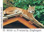 Wild- Freizeitpark Enghagen Tiere ü