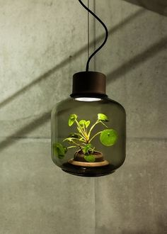 German design team We Love Eames designed a lamp using LED lighting that allows plants to grow indoors without sunlight or water in a self-sustaining ecosystem. Luz Natural, Natural Light, Indoor Garden, Indoor Plants, Eames, Luz Artificial, Nachhaltiges Design, Plant Design, Interior Design