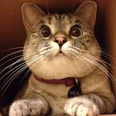 nala_cat's photo