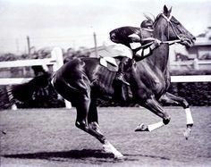 Jockey Jim Pope riding Phar Lap at Flemington Race Course about 1930.