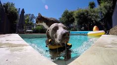 Didga takes it from the park to the pool to cool off with his canine companion in sunny Australia.