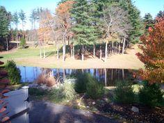 pretty pond on a golf course