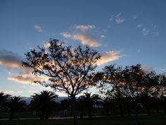 Canary Islands Photography: Parque Sur en Maspalomas CanaryFlowers  Canarias
