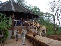 Top and Best Places To Visit in Nairobi, Kenya - Nairobi Giraffe Centre - News - Bubblews