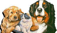 Yorkshire Susy - cimitero virtuale per animali - Comperare o Adottare ? - Adottare oppure?