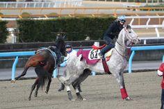 ムーア騎乗のラニに、放馬が急接近