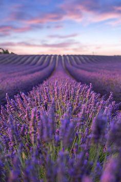Lavender fields - Best things to do in Marseille Field Wallpaper, Purple Wallpaper, Flower Wallpaper, Hd Wallpaper, Lavender Aesthetic, Aesthetic Colors, Aesthetic Pictures, Flowers Nature, Purple Flowers