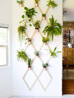 Interesting Ways to Show Off Indoor Plants