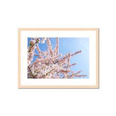 Frühling5.jpg