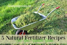 Althoughit may sound quite difficult making your own natural fertilizer can beeasy and straightforward. And you probably dont have to look any further than your own pantry and backyard for the ingredients.