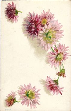 Beautiful Vintage Floral Post Cards