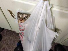 Bir şekilde bir yerlere sıkışmayı başarmış komik kediler