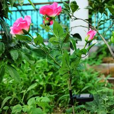3 LED Solar Rose Flowers Garden Lights Outdoor Waterproof Decorative Night Lamp -- BuyinCoins.com