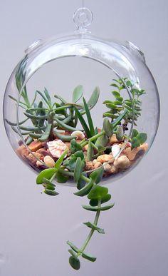 glass hanging terrarium / Succulents