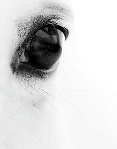 The window to a horse's soul...