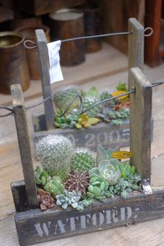 Succulents In Containers, Cacti And Succulents, Planting Succulents, Cactus Plants, Plant Design, Garden Design, Small Garden Fairies, Succulent Arrangements, Rustic Gardens