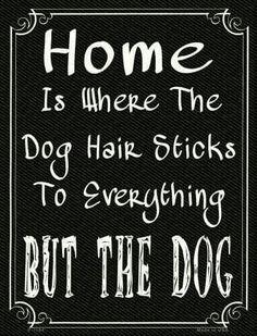 #germanshepherd #dogs
