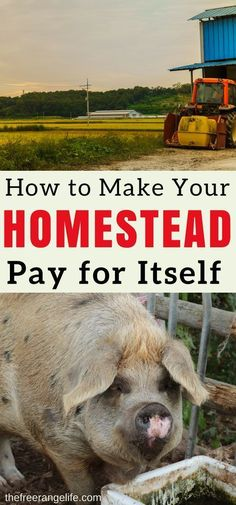 Make your homestead pay for it self! Learn how to create a self supporting homestead that pays for it's own upkeep and expenses. It is one of the first steps in becoming fully self sustainable!