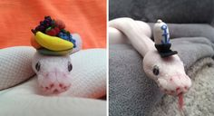 cute snakes with hats - Google Search