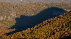 Bear shadow, Blue Ridge Mountains, North Carolina - Flickr/bluesman46