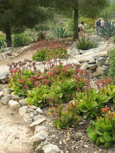 Jardín y colección privada de Antonio Díaz, que cuida y atiende personalmente.