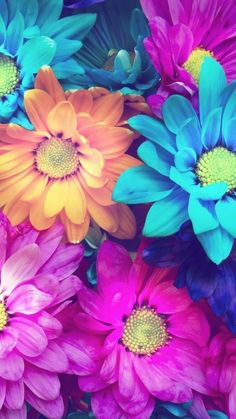 K Confetti Turquoise Floral Wallpaper Floral wallpapers and