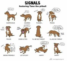 Animal Body Language