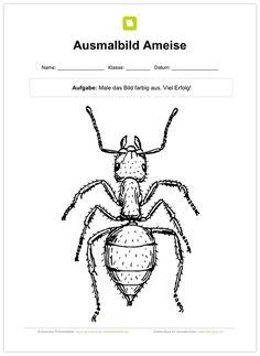 krabbelwiese dominos zu den bisherigen lebenszyklen ameise insekten metamorphose krabbeln. Black Bedroom Furniture Sets. Home Design Ideas