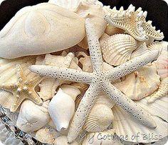 starfish and seashells...